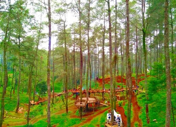 Orchid Forest Cikole Lembang | Tempat Wisata Alam di Bandung | Nchie Hanie